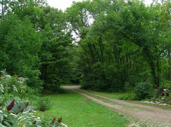 Maple Acres B&B: the driveway