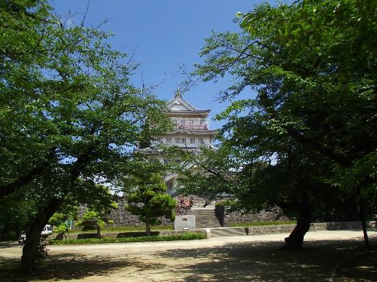 Chiba Castle Ruins : 桜と千葉城(郷土博物館)