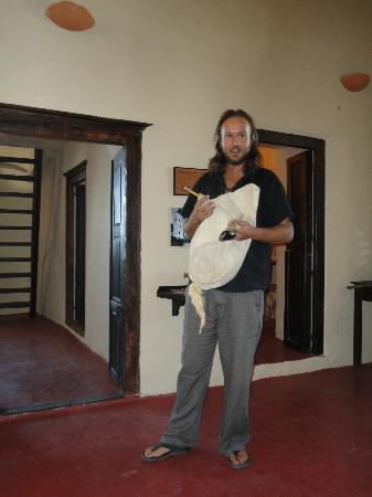 Akrotiri, Greece: Yannis and his performance