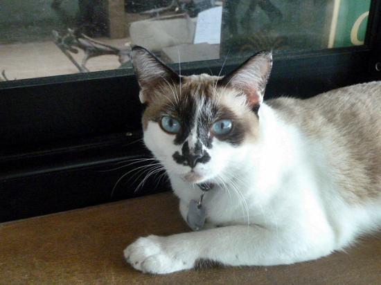 โรงแรมประจวบบีช: Kitty the resident cat