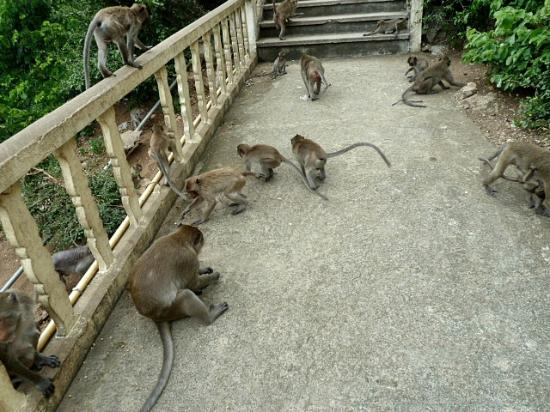 Prachuap Beach Hotel: Monkey's at the Temple steps