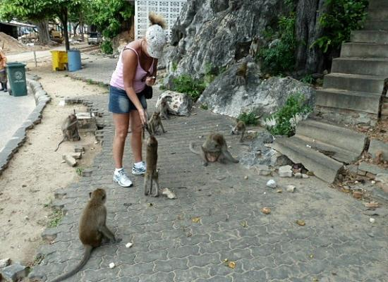 Prachuap Beach Hotel: Feeding the Monkeys