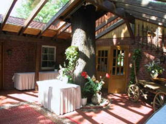 Brackstedter Mühle: Ein Baum in Haus