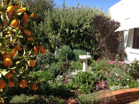 Aran Brae Bed & Breakfast : A view of the garden