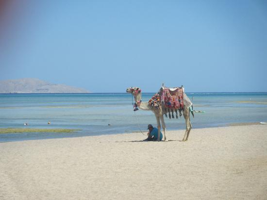 Jaz Mirabel Club: The horrible camel man...don't go on his camel!!
