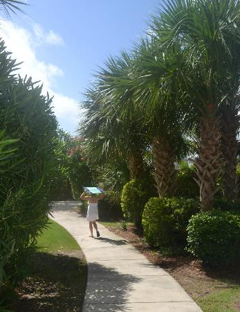 Kingston Plantation Condos by Hilton: The walk way to the Beach