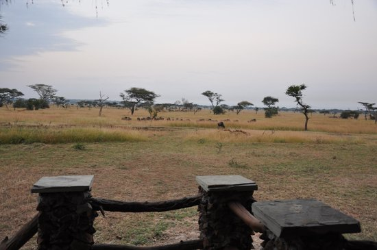 Grumeti Migration Camp: View of part of the great migration from the room