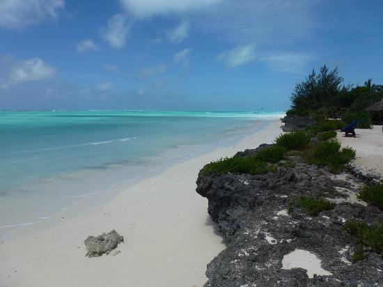 The Zanzibari: Bord de mer