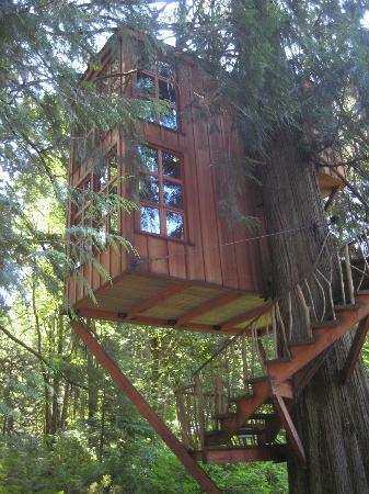 Treehouse Point : the trillium treehouse