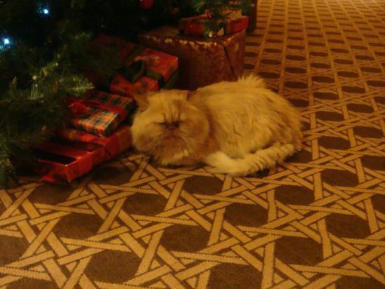 Alpine City Wellness Hotel Dominik: Il simpatico gatto che girava per la hall