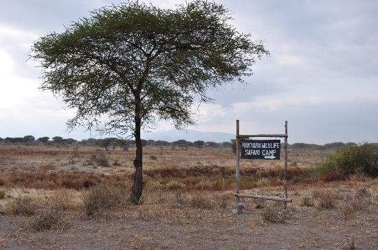 Manyara Wildlife Safari Camp: drive to the camp
