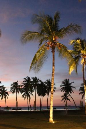 ‪‪Anjajavy L'Hotel‬: Pretty Palm Trees at Sunset‬