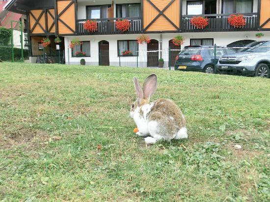 Hotel-Pension Tripic : conigli davanti al tripic