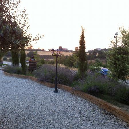 Briciola di Sole: pace tra gli ulivi