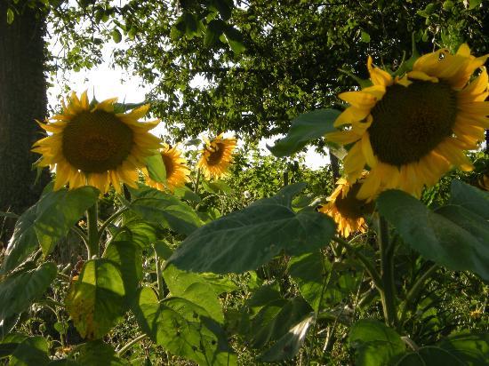 Le Clos de la Garde: Blumenfelder einige Schritte vom Haus