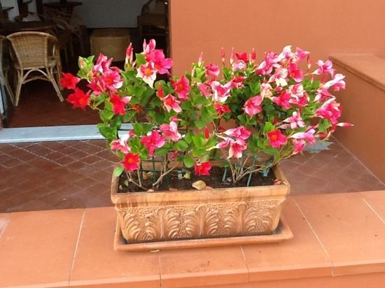 Hotel Riviera Miramare: fiori ovunque