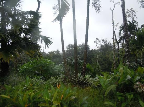 Devagiri Retreat: plantation