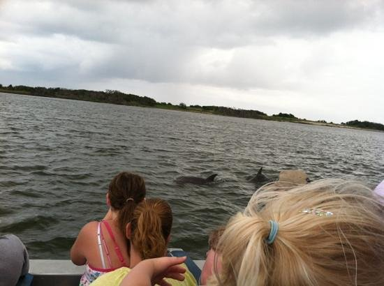 Jet Boat Dolphin Tours: dolphins swimming right next to us!