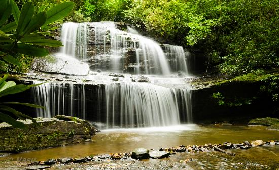 Miller's Land of Waterfall Tours: woodcove