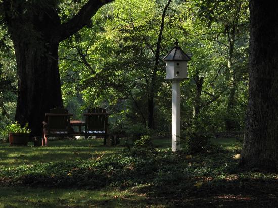 Foxfield Inn: Backyard view