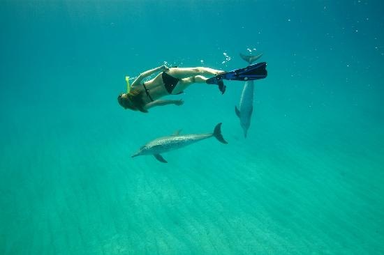 WildQuest: With our dolphin friends..