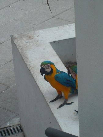 Hotel Puerto de la Cruz: parrots