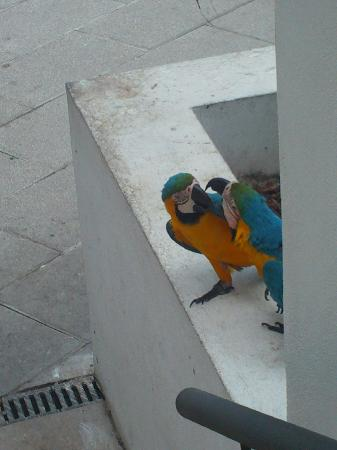Hotel Puerto de la Cruz: parrots fighting