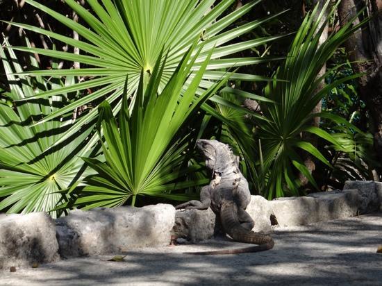 Bel Air Collection Xpu Ha Riviera Maya: sur la route du restaurant