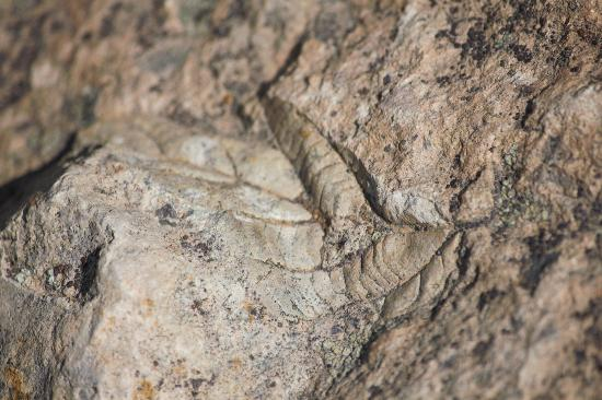 John Day Fossil Beds National Monument: Fossil of a leaf when the dessert was a forest ...