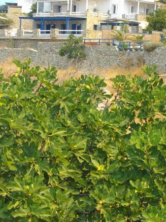 Mykonos Essence Hotel: vista dalla strada in basso alla baia dell'hotel Eva