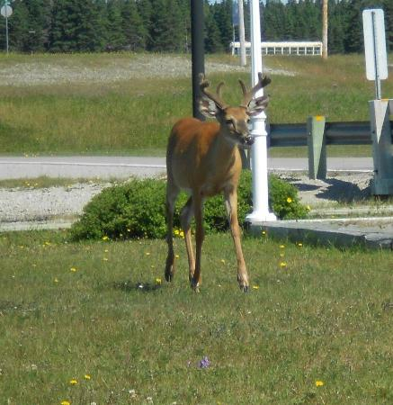 Anticosti Island: Deer and other wildlife are regularly seen