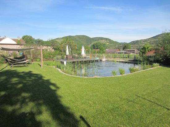 ad vineas Gästehaus Nikolaihof: Pleasant combination of a swimming pool and a pond.