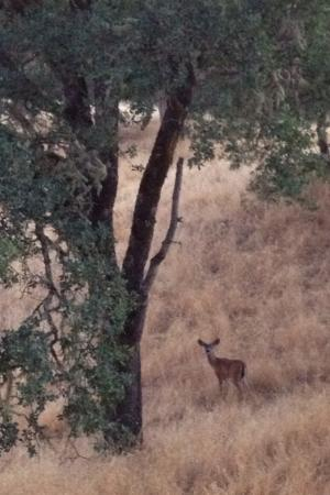 Vichy Springs Resort: A buck we saw on our hike