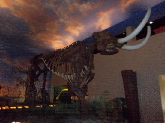 South Florida Museum and Bishop Planetarium: Mastadon