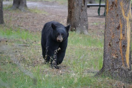 Ana's Grand Excursions: Black Bear