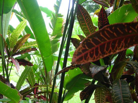 روزدون هوتل: lush plants..