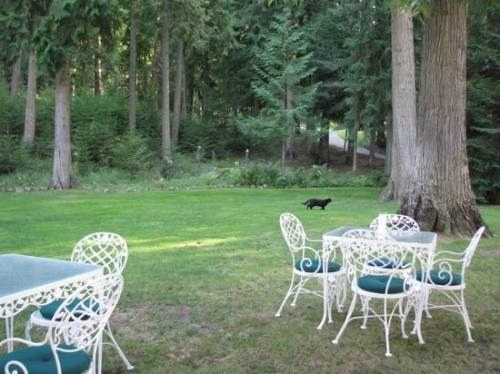 Clark House on Hayden Lake: Back lawn with Licorice the cat