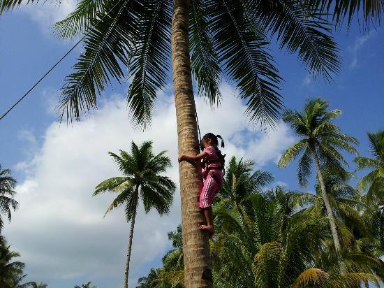 Loola Adventure Resort: Coconut Tree Climbing