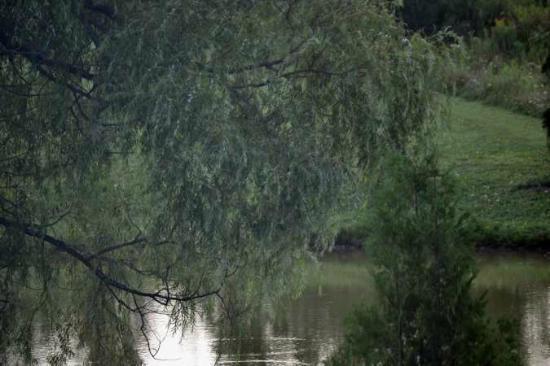 Days Inn Shelburne/burlington: A willow drapes over the pond