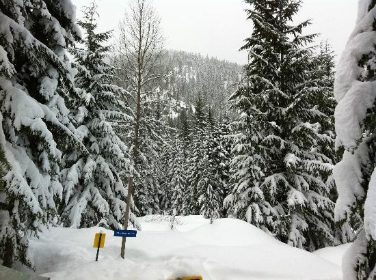 Stevens Pass Ski Area : Mtn