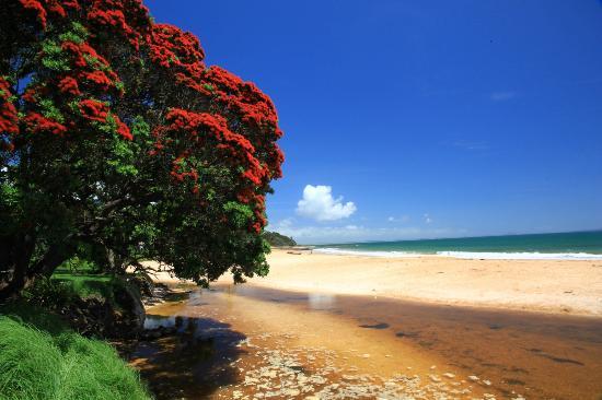 داوتليس باي فيلاز: Cable Bay Beach