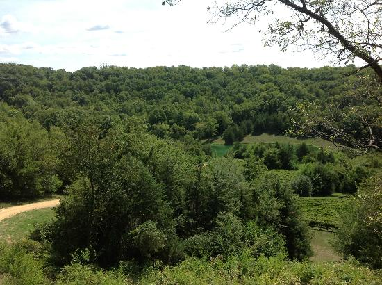 Iowa Wine Tours: Fields of Rocky Waters Vineyard