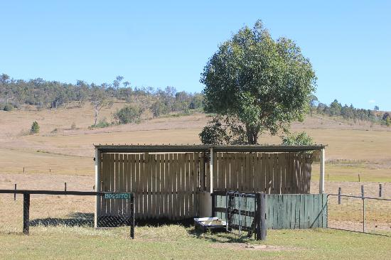 Clandulla Cottages, Beaudesert: Farm