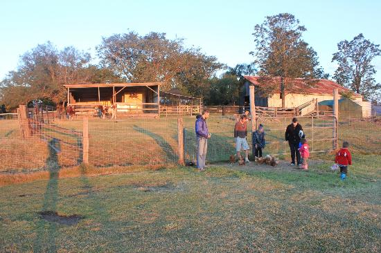 Clandulla Cottages, Beaudesert: Dusk - animal feeding
