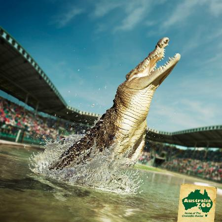 Australia Zoo: Join at midday for the Wildlife Warriors show in the world famous Crocoseum