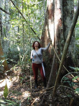 Tariri Amazon Lodge: Caminhada na floresta