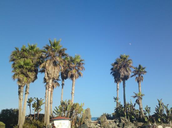 Las Rocas Resort & Spa: El lugar esta rodeado de palmeras