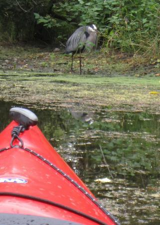 Mercer Slough Nature Park: Nothing unusal. Just another heron