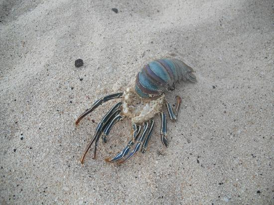 The Cooks Oasis Holiday Villas: Found this wee man on the beach