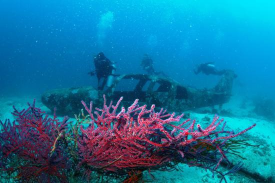 Quo Vadis Dive Resort: Plane wreck dive site in Moalboal
